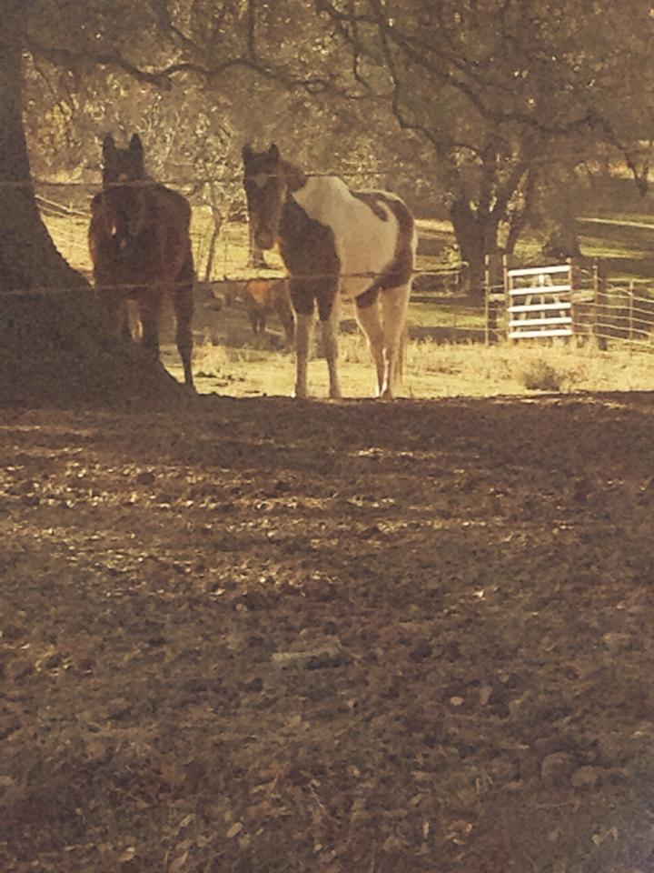 Two horses in field - photo by Ursa Stearns