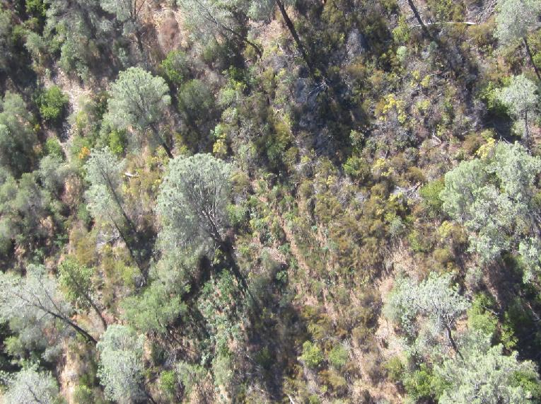 Photo of garden from the air - photo Mariposa Co Sheriff