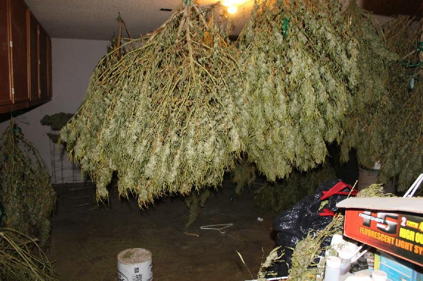 Plants drying in garage - photo Madco Sheriffs Office