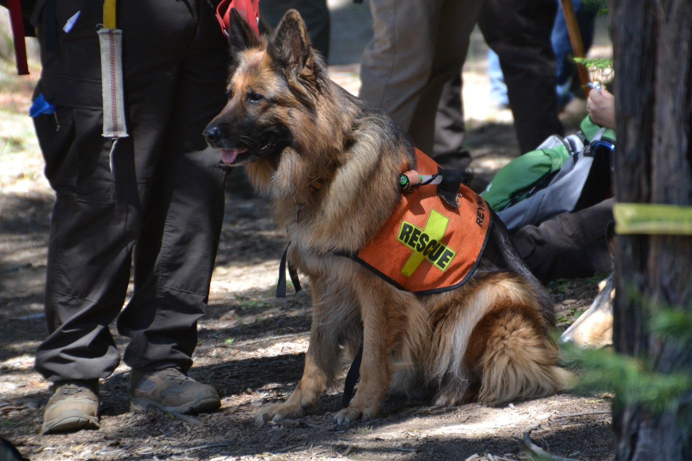 Reyna - Search  Rescue dog