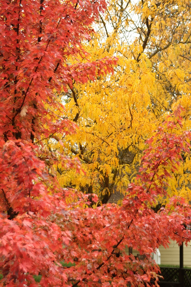 Evergreen students take on photography - fall colors - photo by EHS student