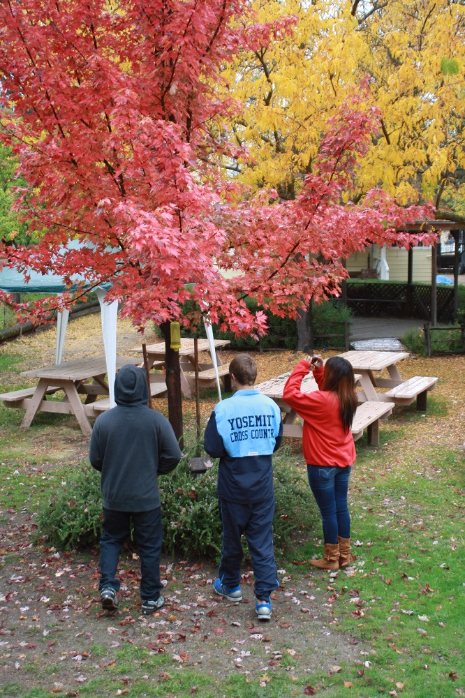 Evergreen students work on their photographic skills 2013 - fall colors - photo by EHS student