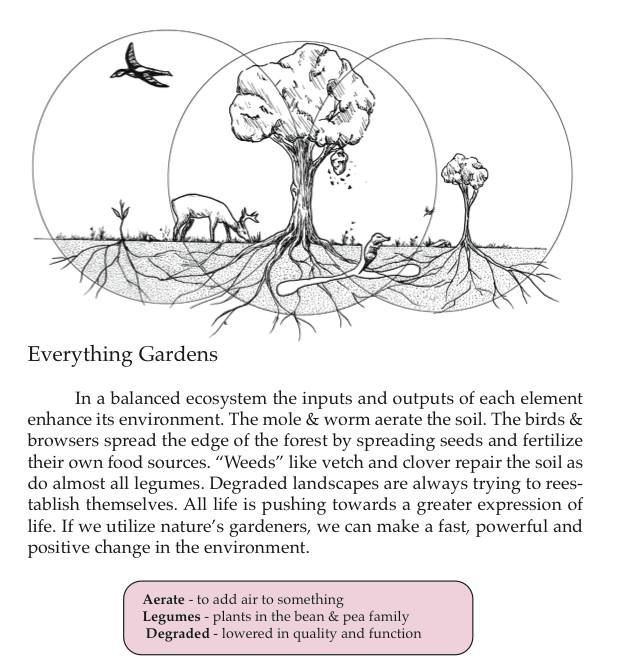 Matt Powers Permaculture page from textbook - Coarsegold resident and Minarets teacher Matt Powers has written a textbook on Permaculture design