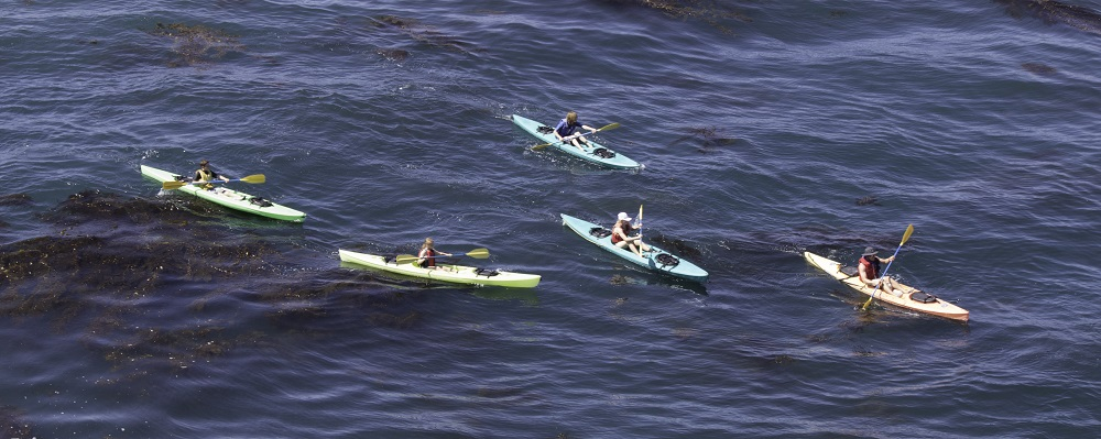 CIMI participating students kayak - overhead view - Catalina 2013 - Photo Credit Virginia Lazar
