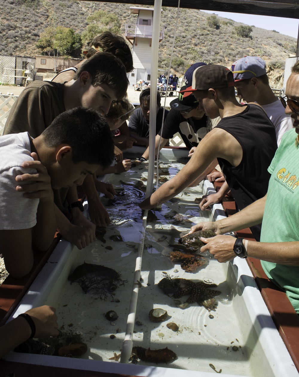 Oak Creek Intermediate students study sea life in Catalina 2013 - Photo Credit Virginia Lazar