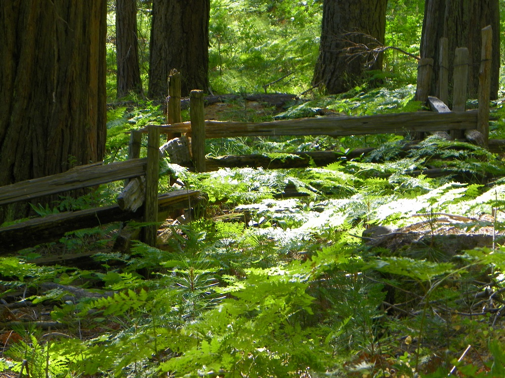 Meadow Loop in Yosemite - July 2014 - Ferny dell on the trail - photo by Kellie Flanagan