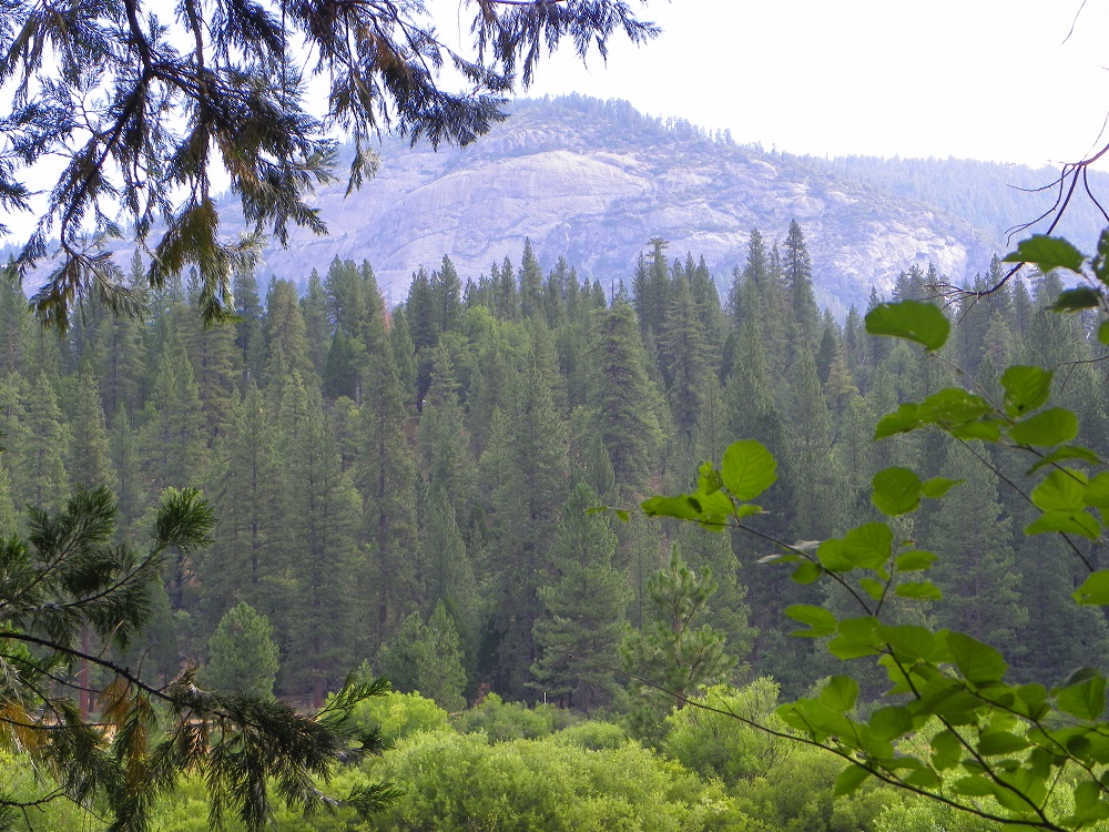Meadow Loop in Yosemite - July 2014 - View from the trail - photo by Kellie Flanagan