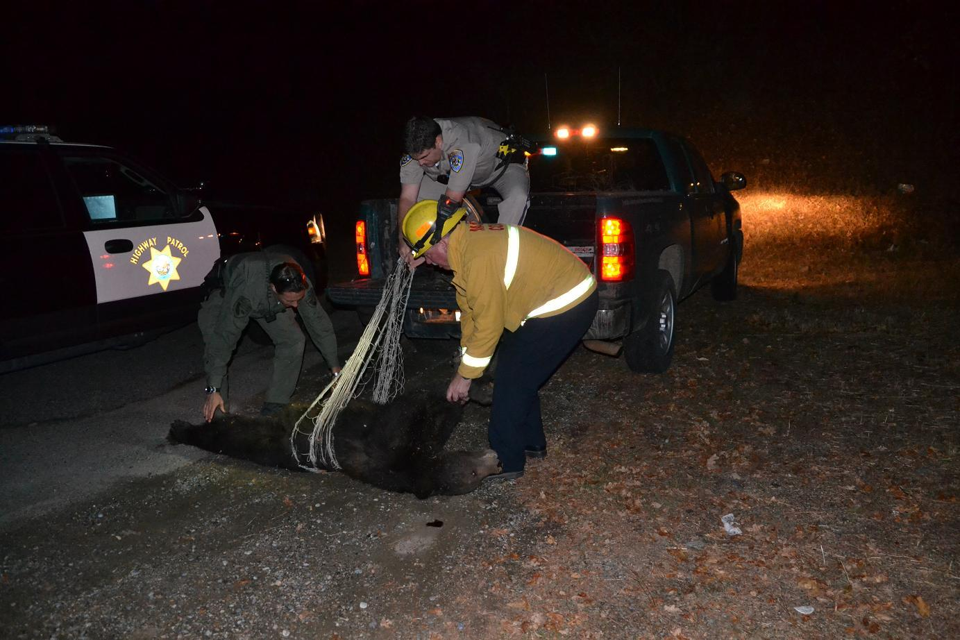 Mike Orem Nick Cosentino and Martin Lawler load dead bear into pickup
