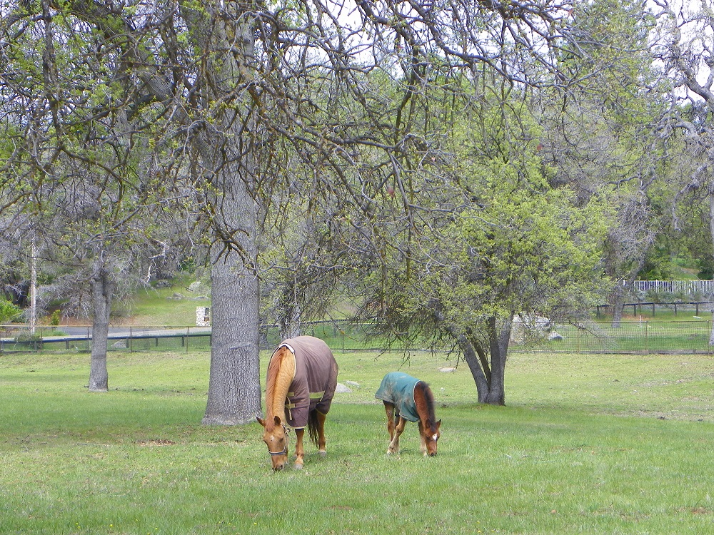 Horse and foal - Mudge Ranch - photo by Kellie Flanagan 2014