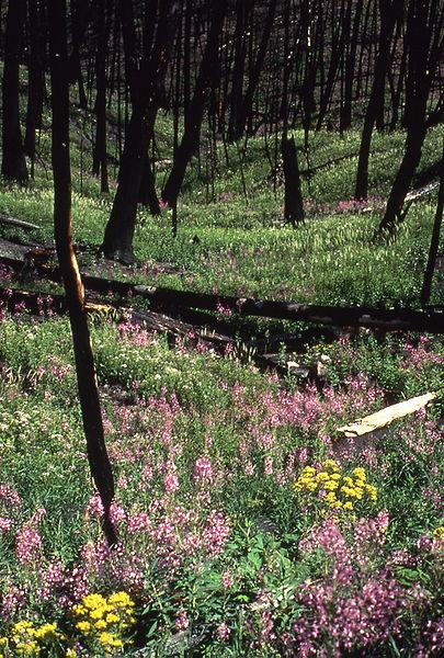 Yellowstone in the Spring of 1989 - photo National Park Service