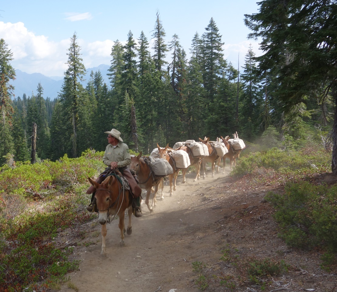 Mule pack train - photo courtesy US Forest Service