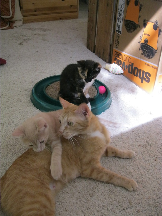 Linus with kittens