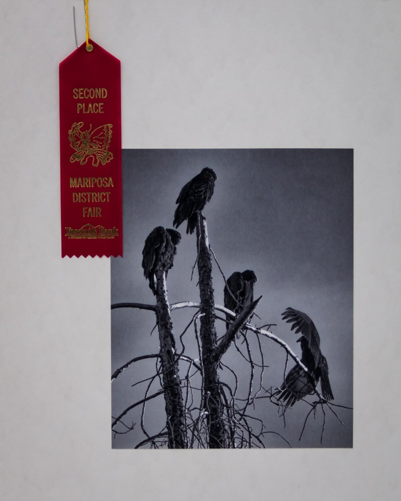 Vultures by Virginia Lazar - 2nd Place at Mariposa County Fair 2014