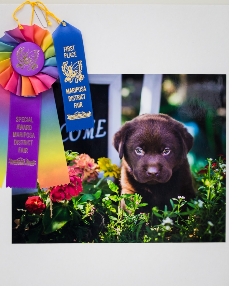 Welcome Puppy - photo by Virginia Lazar - First Place Mariposa Fair