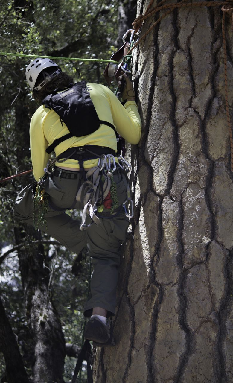 SAR High line rescue technique - anchored to tree - Photo by Virginia Lazar
