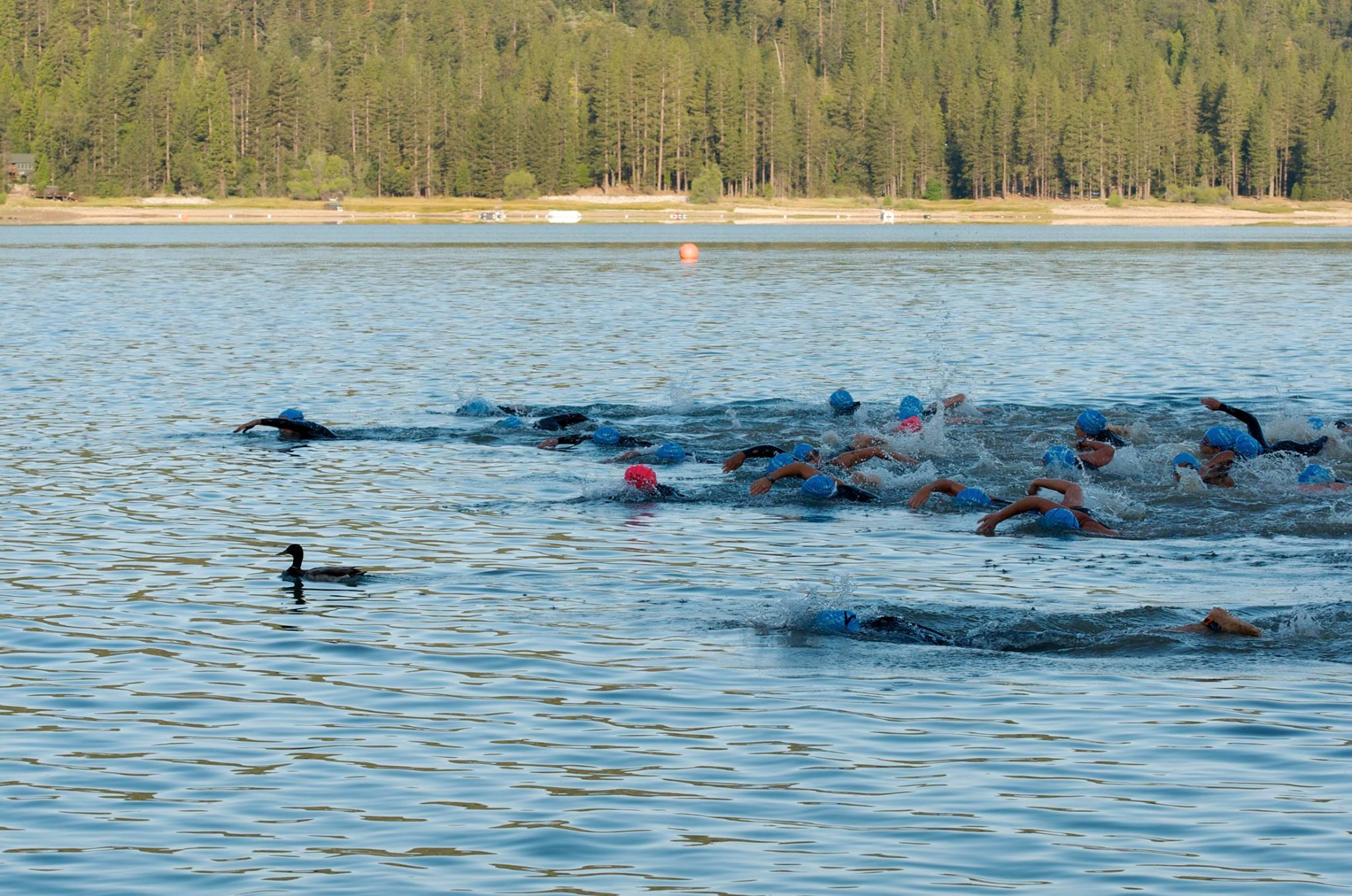 Racers take off into the water at Bass Lake Classic Tri - Photo by Monique Wales