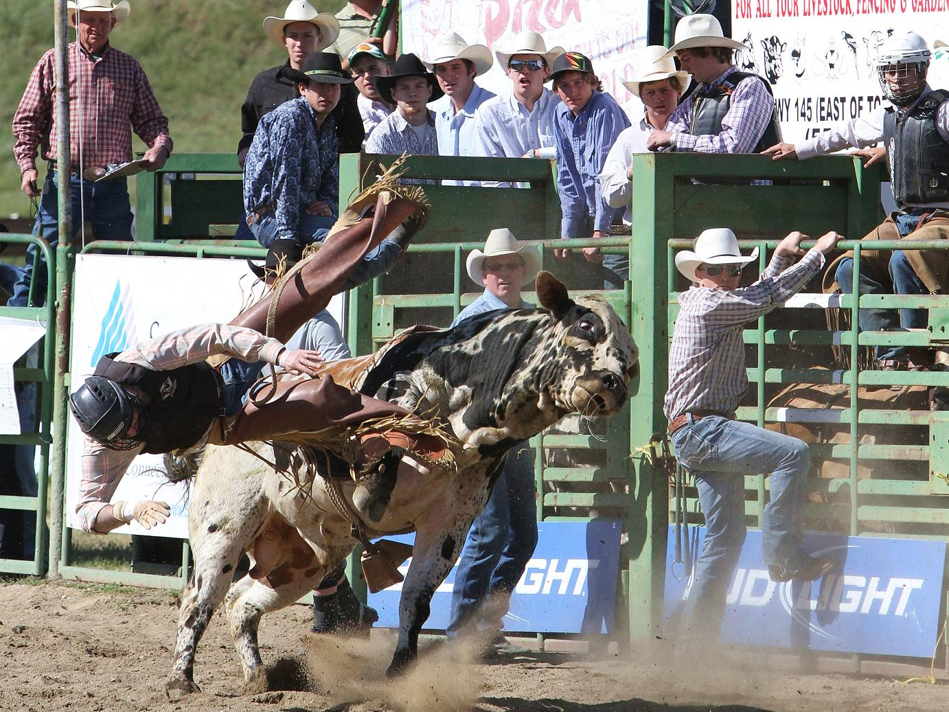Bull Rider 2011 - photo courtesy of Susanne Updike-Waite