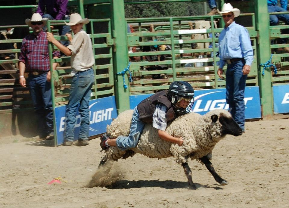 Mutton Bustin - photo courtesy of Tammi Kudra Edmonds