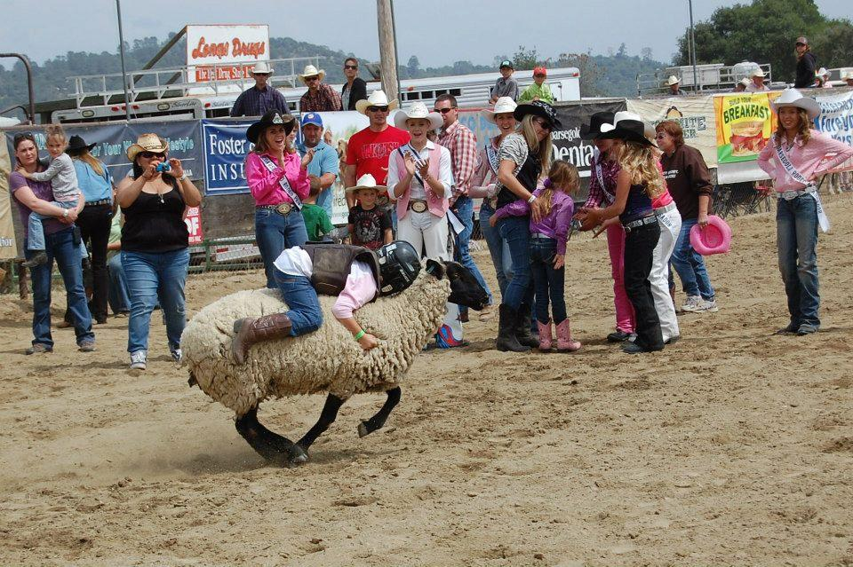 Mutton Bustin 1 - photo courtesy of Tammi Kudra Edmonds