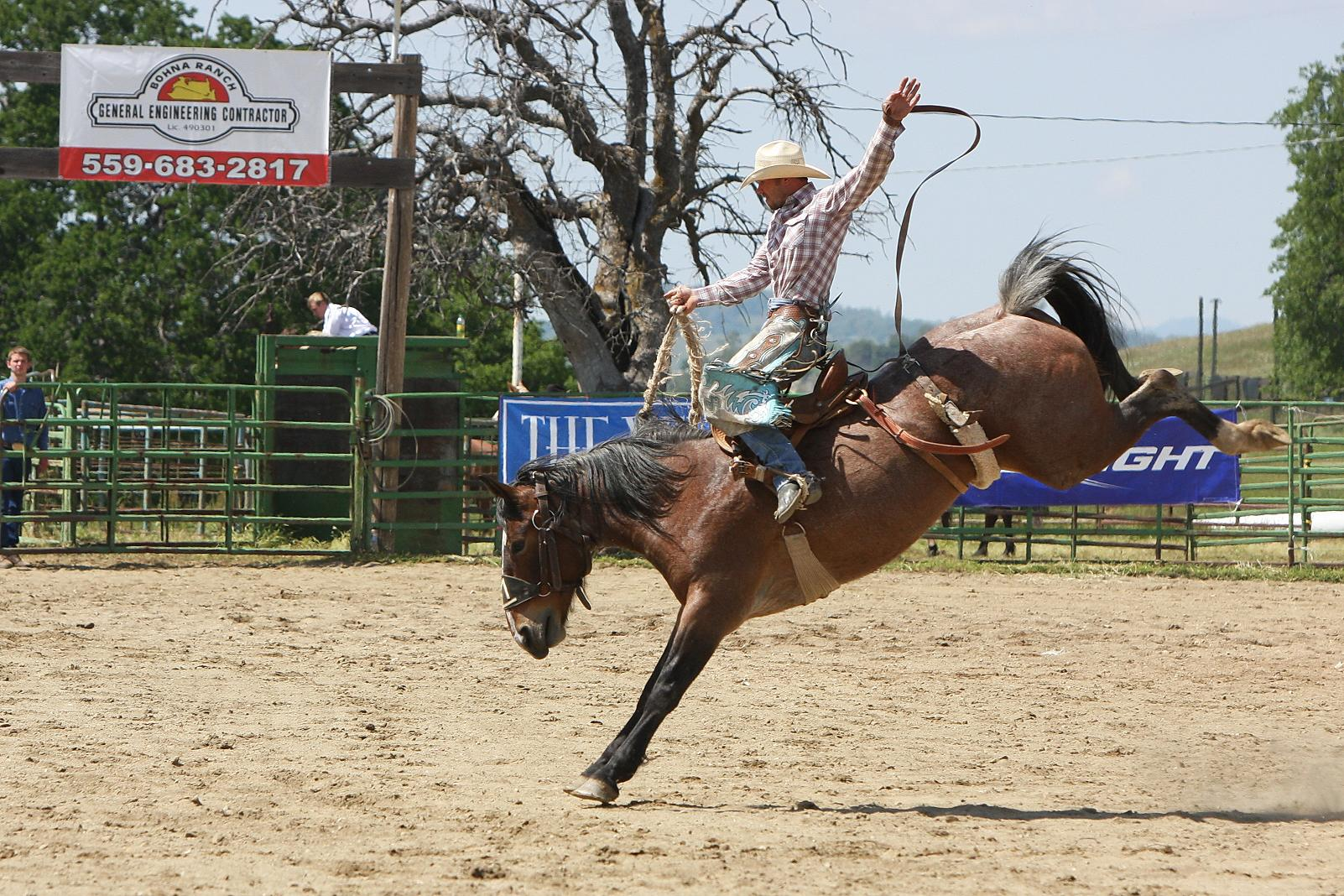Saddle Bronc Rider -  Photo by Susanne Updike-Waite