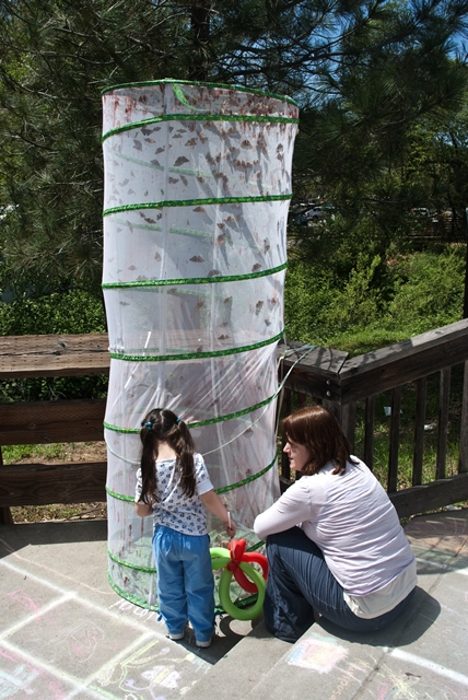 Mariposa Butterfly Festival - big tower of butterflies about to be released - Photo courtesy of Charles Phillips Stone Creek Gallery Mariposa